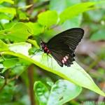 Mariposa. Foto Ronald Pachas